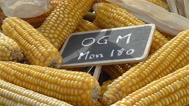 Organismes génétiquement modifiés