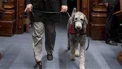 Pepper, le premier chien admis au Salon bleu, à l'Assemblée nationale