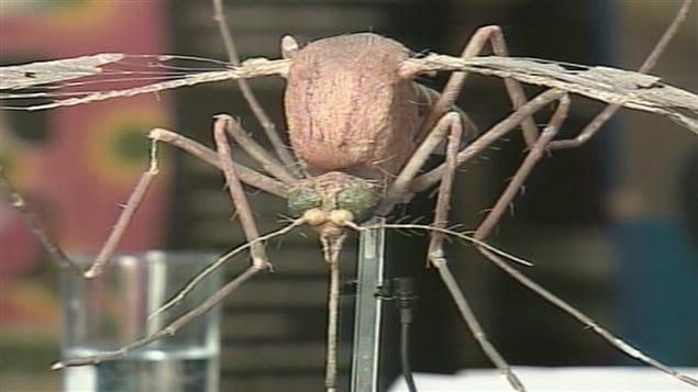 La malaria est transmise par les insectes