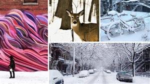 Des photos des internautes sur l'hiver dans le Grand Montréal.