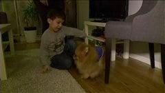 Déception d'une mère après l'achat d'un chien pour son fils autiste