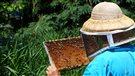 La mortalité des abeilles (2015-05-21)