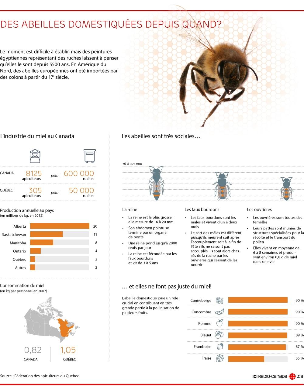 abeille morte devant ruche