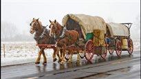 Un Québécois déménage dans l'Ouest en charrette et à cheval