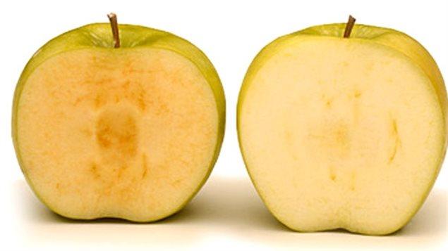 La pomme Arctic (à droite) à côté d'une pomme naturelle