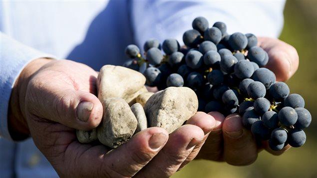 Le terroir, vignoble Larose Trintaudon