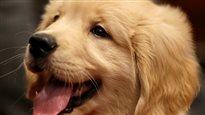 Un nettoyage printanier spécialisé offert aux propriétaires de chiens