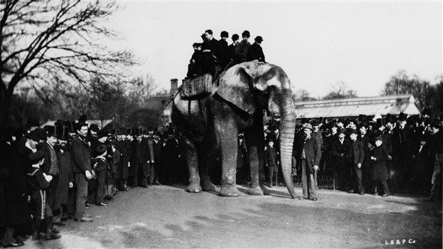 Des gens font un tour sur le dos de Jumbo l'éléphant, au Zoo de Londres en 1880.