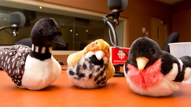 Quelques exemplaires de la collection d'oiseaux en peluche chantants de Pierre Gingras