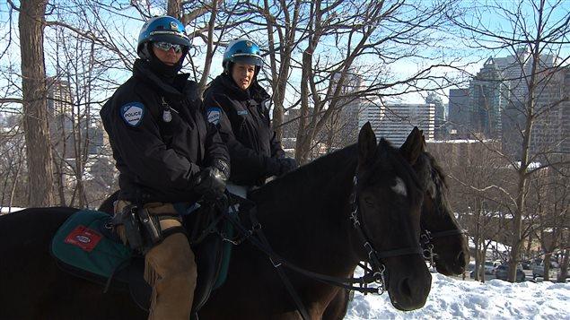 350e anniversaire cheval canadien