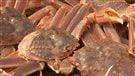 Du crabe des neiges à vendre au quai de Sept-Îles