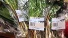 De l'ail des bois interdit en épicerie (2015-04-30)