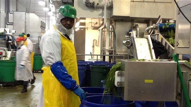 Un travailleur étranger temporaire dans une usine d'alimentation québécoise.
