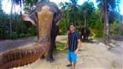 Un selfie pris par un éléphant