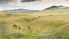 Ranch historique Waldron