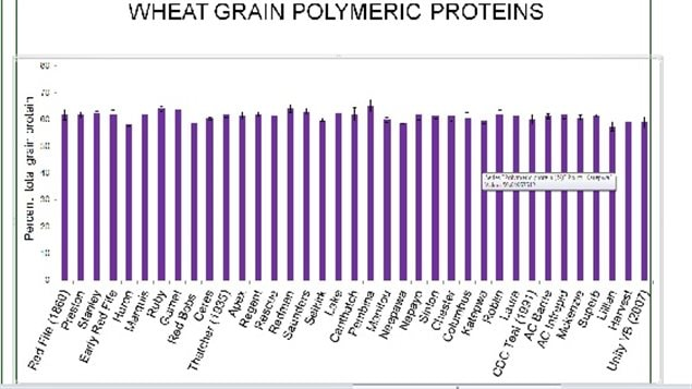 Polymeric protein levels also showed little variation; The concentration was lowest 57% in Lillian (2005) and highest 65% in Pembina (1959). Interestingly Red Fife (1860) and Saunders (1947) had 62% and 63%, respectively