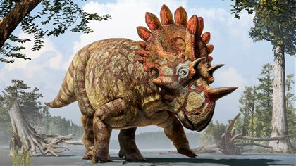 Artist's rendition of what Regaliceratops peterhewsi probably looked like, based on observations of the skull.