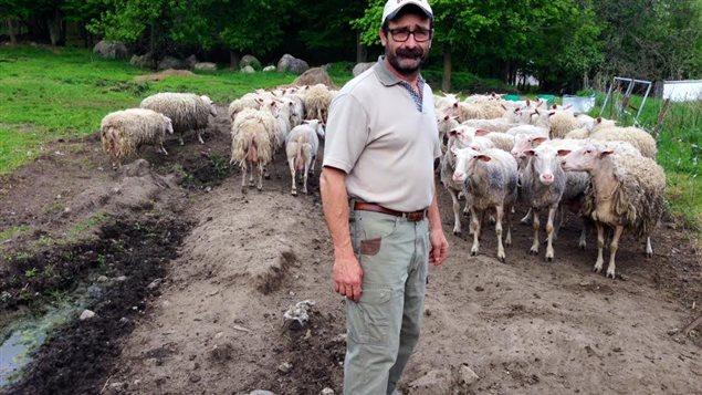 Christian Girard avec une partie de son troupeau de brebis