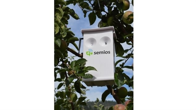 Vancouver-based Semios was approved by Health Canada in May for the first aerosol pheromone on the national market. Semios's system detects moths, and automatically dispenses puffs of pheromone as needed. . Unlike pheromone traps which require  agreat many small traps to be spread through a crop, one spray dispenser is hung in each acre, and doesn't kill the insect, merely confuses it so no mating can take place. greatly reducing the target pest population and the damage they cause