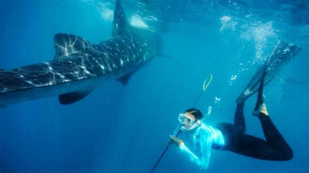 A conservation biologist tags a whale shark off Isla Holbox, Mexico.