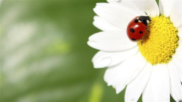 Les insectes sont indispensables à la procréation des fleurs