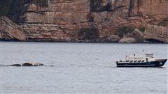 La carcasse de la baleine noire remorquée