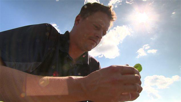 Le fermier Kent Erickson à Irma s'inquiète pour ses récoltes de canola.