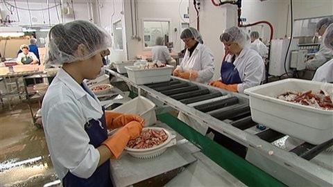 Des travailleurs étrangers dans une usine de poissons.