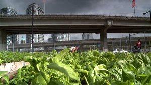 La haute technologie se mêle d'agriculture en ville