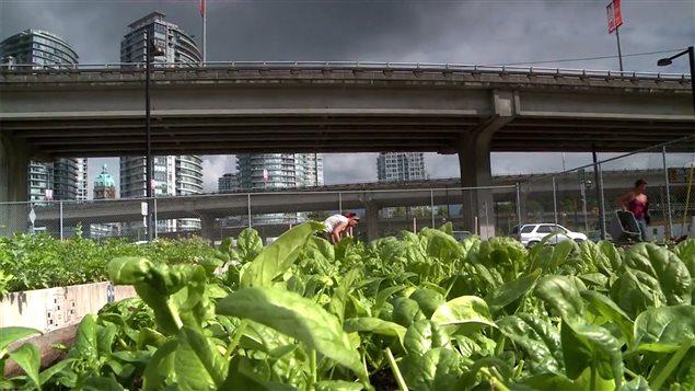 Image tirée du film <em>Une révolution agricole… urbaine!</em>