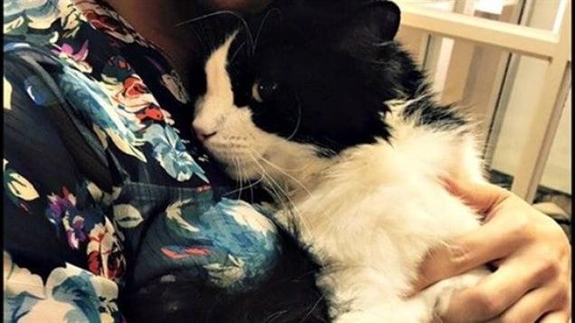 Le c l bre chat saskatchewanais bruce almighty aura une for Adaptation chat nouvelle maison