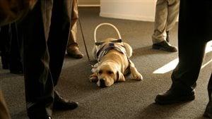 À la recherche de moniteurs de chiens-guides