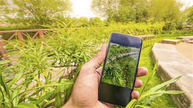Un jardinier utilise son t�l�phone pour identifier ses plantes.