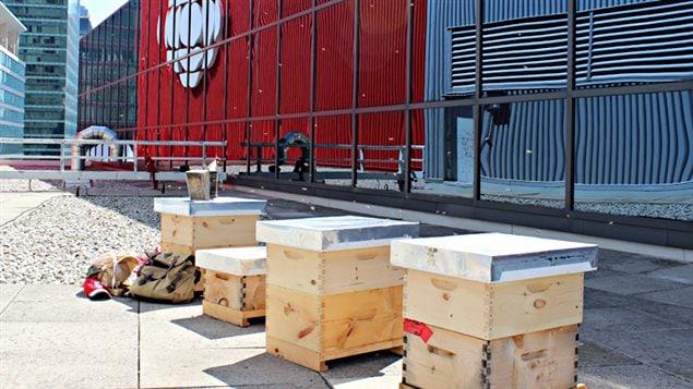 Le Centre de diffusion de Toronto abrite désormais quatre ruches contenant 20 000 abeilles chacune.