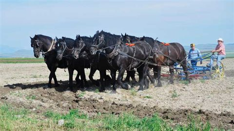 2010 Even with all the tractors, real horsepower remained  important on prairie farms throughout most of the 20th centure
