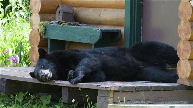 Un ours dort près de la porte d'une maison.