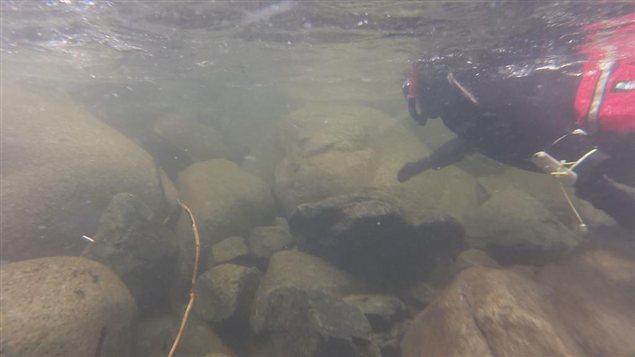 Photo dans la rivière Seymour.