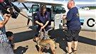 Un vol d'avion Sept-Îles-Trois-Rivières pour six chiens