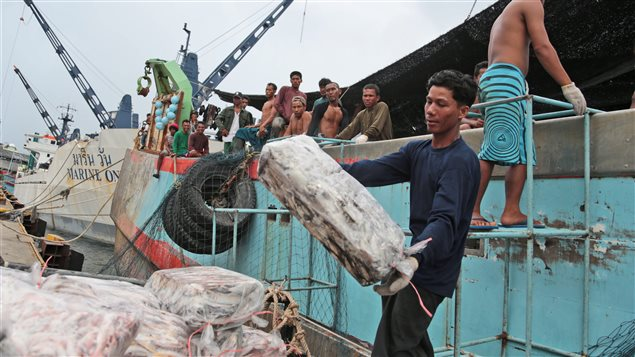 On April 3, 2014 workers unloaded frozen fish from a Thai boat in Indonesia. Tens of thousands of migrant workers are trafficked each year through Thailand.
