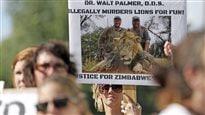 Les autorités américaines enquêtent sur la mort du lion Cecil