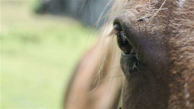 Le museau d'un cheval