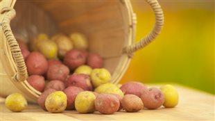 La pomme de terre : de féculent méprisé à légume tendance