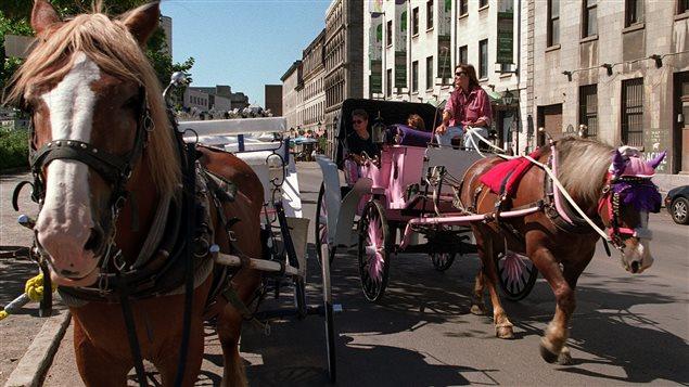 Des calèches sur la rue de la Commune à Montréal.