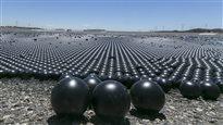 Déversement de balles noires: une solution originale pour lutter contre la sécheresse
