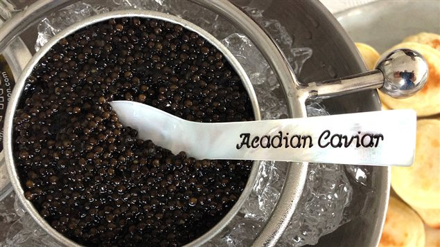 La caviar d'esturgeon de la petite entreprise Acadian Sturgeon au Nouveau-Brunswick