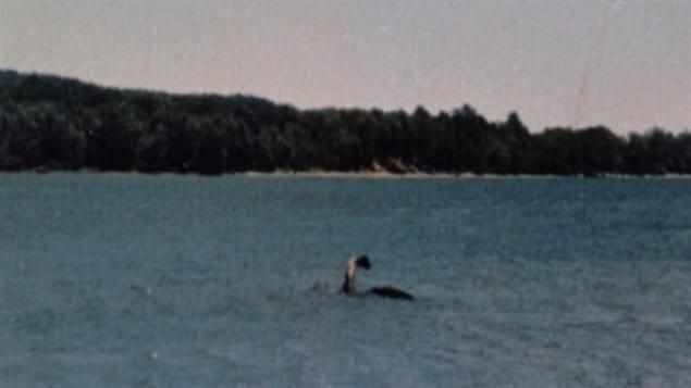 Image de « Champ », le présumé monstre marin américano-canadien du lac Champlain.