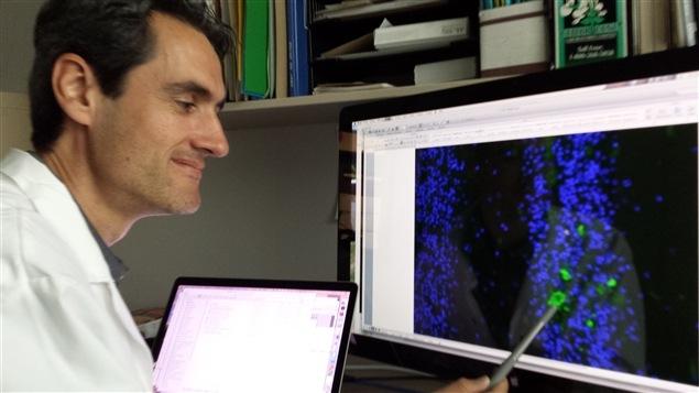 Frédéric Calon, chercheur au Centre de recherche du CHU de Québec-Université Laval