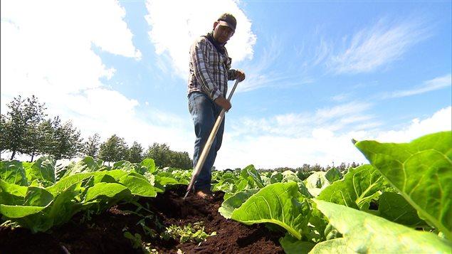 Un travailleur dans un champ