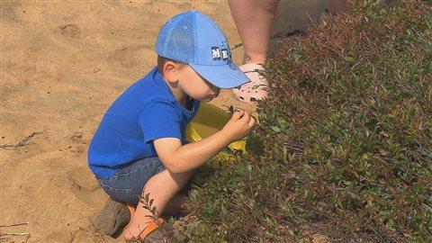 Petits et grands participent à la cueillette de bleuets.