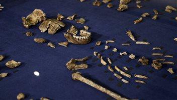 The bones suggest Homo naledi had an odd mix of human-like and primitive characteristics.